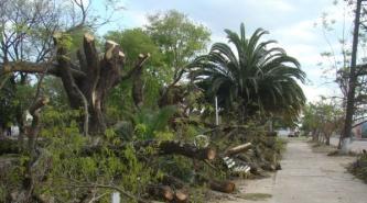 Salvaje daño al medio ambiente en la plaza central de Du Graty