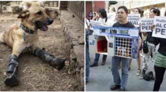 Ya es ley el agravamiento de sanciones por maltrato animal