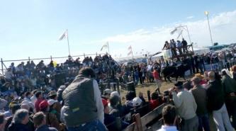 Agronea 2015: Transmitirán la muestra y los remates ganaderos por internet