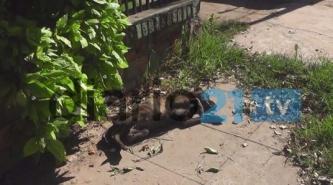 Alarma en Sáenz Peña: Envenenan a perros y ya murieron seis