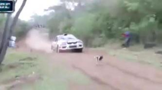 ¡Un auto lo saltó y el perro se salvó de milagro!